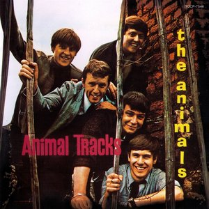 Animals - Animal Tracks