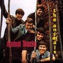 Animals-Animal-Tracks